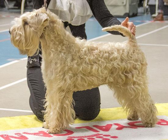 TeddydogsBecauseImSpecial