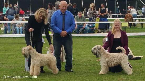 Bob en Bos Dogshow De Baronie 4-6-2016